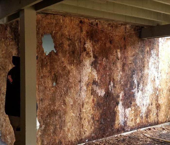Mold and rotten sheathing on outside of house