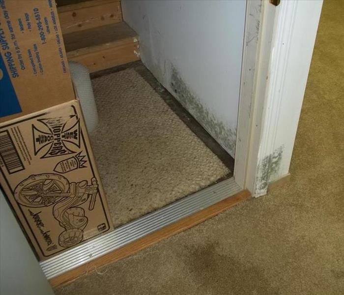 Mold Discovery in Quincy, IL