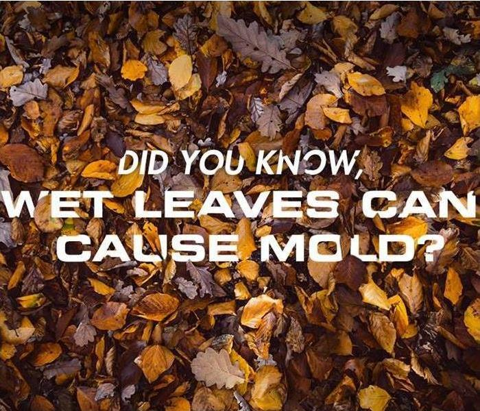 All About MOLD!