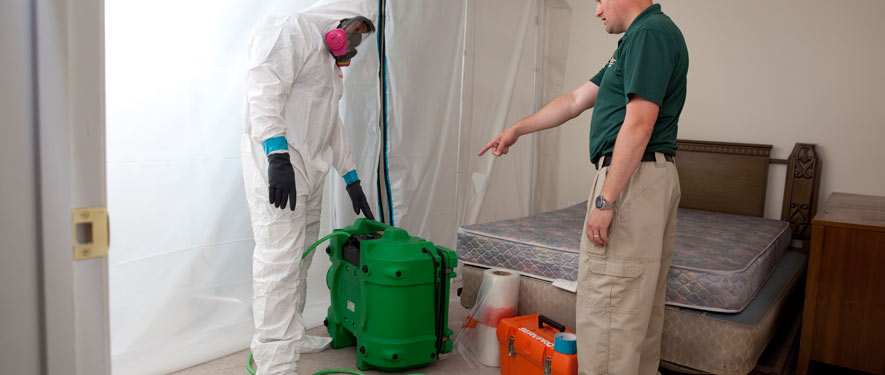 Quincy, IL mold removal process